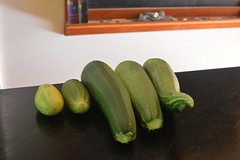 Zucchinis and cucumbers just plucked from their vines (jungle mama) Tags: seattle dahlia chicken home kitchen rose barn fence pig cow log farm cucumber bee doorknob squash sunflower owl cabbage hydrangea onion kiwi phlox preserve kale grape wheelbarrow blackberries grapevine canning aster greenbean chard farmlife squashflower zuchinni pickling kiwivine spiralizer sheetsonline