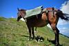 Barbara a posteriori (Gaia83) Tags: veterinarifotografi trekkingconimuli