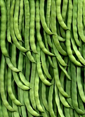 56133.01 Phaseolus vulgaris (horticultural art) Tags: food beans pattern vegetable phaseolus phaseolusvulgaris horticultrualart