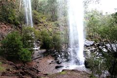 Paradise Falls (Lesley A Butler) Tags: nature landscape moss australia victoria waterfalls vegetation lichen wildflowers geology paradisefalls cheshunt conglomerate australiannatives northeastvictoria