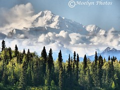 Denali (aka Mt. McKinley) from Scotty Lake in Trapper Creek (explored) (moelynphotos) Tags: trees mountain nature alaska clouds scenic snowcapped denali mountmckinley scerery highestmountaininnorthamerica