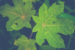 Leaf Story (VisualsDiary) Tags: world india green nature word leaf flickr story gettyimages gujarat twitter flickrbest harshshahphotography dailynaturetnc14