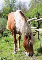 Horse_2 (mirko100976) Tags: horse natura cavalli cavallo animali