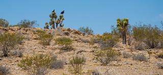 Desert View - Mojave National Preserve - San Bernardino County - California - 13 July 2014