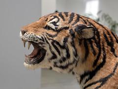 Les Mues, Huang Yong Ping - HAB Galerie, Nantes (Selbymay) Tags: snake tiger serpent tigre nantes 2014 huangyongping hangarbananes voyagenantes habgalerie lesmues