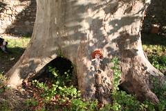 Dans mon jardin, il y a un arbre... extraodinaire...