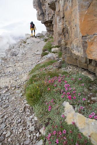Kukkia matkalla Torre Toblinolle