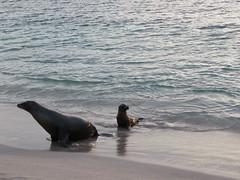 Galapagos - San Cristobal-228