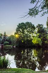 Un matin de juillet (cdricmerceron) Tags: morning france water landscape eau matin vende rayondesoleil paysdelaloire mareuilsurlay