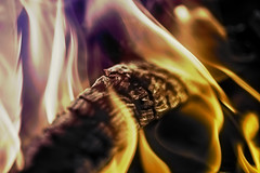 Fire (my new username andreysolovev) Tags: treeonfire