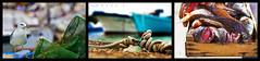 Rimini - Mare 85 (Massy-Rimini) Tags: italy italia rimini harbour porto fish pesce seagull gabbiano uccello bird boat barche fishboat pescherecci net reti water acqua sea mare beach corda summer estate hot caldo