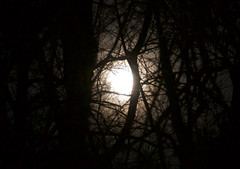 Moonlight Through The Trees (chands62) Tags: moonlight february park dawn springlake viennava