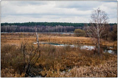 alone (-Visavis-) Tags: landscape lonely alone earlyspring kyiv ukraine swamp birch canoneos5d canonef70200mmf4lusm forest sky