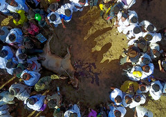 Aerial view of the slaughter of a bull during the Gada system ceremony in Borana tribe, Oromia, Yabelo, Ethiopia (Eric Lafforgue) Tags: aerial aerialview africa animal arab badhaasa boran borana borena bull celebration ceremony circle colourpicture cow crowd cruel culturalheritage cultures drone eastafrica ethdrone0317119 ethiopia gaada gada gadasystem gadaa horizontal hornofafrica oromia oromiya oromo outdoors sacrifice slaughter togetherness traditionalculture traditions tribalculture unesco unrecognizableperson yabello yabelo