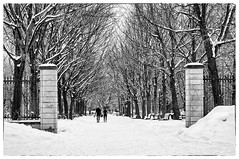L'hiver, encore  / Winter, still (Joanne Levesque) Tags: montreal hiver winter neige snow parc park arbres trees paysage landscape nb bw nikond90 parclafontaine gens people urbain urban