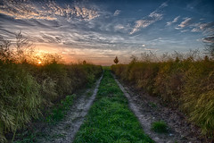 in the fields (bocero1977) Tags: lines landscape sunset nature germany mood outdoor fall perspective light agriculture trees blue sun asparagus way path autumn sky green colors clouds row field