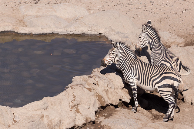 Hustle and bustle at the waterhole
