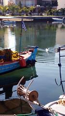 Calma (Elisabeth Arvaniti) Tags: greece blue water sea boats port outdoor spring freedom calmness beauty mirror hometown itea fokida fokis animal swim summerloading ελλάδα φωκίδα ιτέα flag home homeland