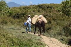 Amigos en el camino (paopradar) Tags: paisaje landscape nature naturaleza caballo cabalgata jinete transporte hourse guadalupe santander colombia