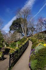 Going up... (Sundornvic) Tags: spring flowers blossom blooms blooming park garden dingle shrewsbury shropshire quarry green light sun shine water trees plants nature