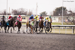 First Time By (Casey Laughter) Tags: racehorse turfway thoroughbred horse horseracing horses winner loser fun racing racetrack race track saddlecloth tack gate taa