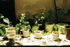 (envee.) Tags: 35mm film photography still shoot is dead analogue camera fujifilm fuji colour c200 iso 200 fujica stx1n da lat dalat an cafe vietnam break december dec 2016 choemditheovoi