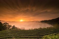 南山寺日出 (Tariq Peng) Tags: fujifilm fuji xt1 xf1024mm f4 富士 風景 晨昏 日出 黑卡 gnd 漸層鏡 cpl 天空 台灣 taiwan sky clouds nature landscape
