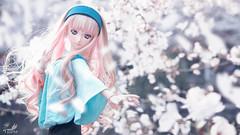 桜 (帝王赤) Tags: sheryl nome macross frontier doll dollfie dream volks bjd japanese toy action figure heero nikon d810