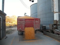 "Carol Gamm-Smith-""Big John"" Delivers Again! 11/9/13 (Missouri Agriculture) Tags: red truck corn elevator grain dump bins grainbins unloading prideofthefarm"