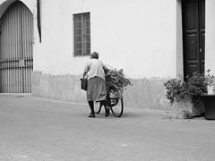 streetManta2014_IMG_0038 copia (stegdino) Tags: bike walking walk step elder bici behind rockon day172 odc gamewinner contadina cy2 yourockwinner yourockunanimous herowinner ultraherowinner ourdailychallenge stegomisc 3652014 365the2014edition 21062014 pinnacle20150209