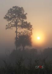 Sunrise (SouthFLfoto) Tags: sunrise everglades enp estherrosado