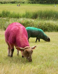 For the shear joy of it (Shamus O'Reilly) Tags: fun amazing funny colorful sheep surreal latitude 2014 flickrelite