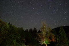 Painted tree (jpstanley) Tags: california trees sky tree night stars sequoia startrails campnelson