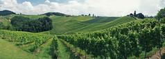 South Styrian Wine Route, Austria (zraph) Tags: panorama austria sterreich vineyard wine hills slovenia steiermark wein styria weinrebe sdsteiermark weinstrase