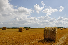 ...Aprs (Ombre&Lumiere) Tags: nature champs agriculture campagne moissons