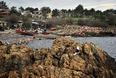 Escena maritima (-Sören-) Tags: ocean costa uruguay mar nikon gaviota oceano maldonado pescadores piriápolis d3000