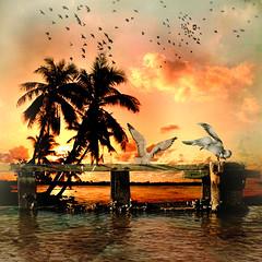 Seagulls and palm trees (jaci XIII) Tags: trees sea seagulls praia beach mar gaivotas palmeiras palm