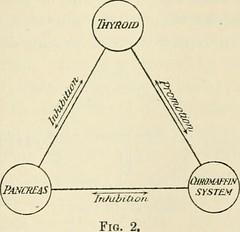 Anglų lietuvių žodynas. Žodis adrenal medulla reiškia antinksčių medulla lietuviškai.