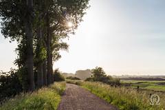 Gegenlicht (Michal Renee) Tags: trees sunset sun holland tree netherlands bikepath bike path 5 feld felder fields damm bume baum gravel radtour gegenlicht strandurlaub breskens fahrradtour