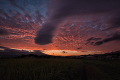 Nightcast (jasohill) Tags: life pink light sunset sky beauty japan clouds canon amazing rice paddy  drama  tohoku 2014 lenticuar