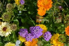 DSC_2041 (rajneet4) Tags: park flowers macro landscape photography colours greenery