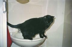 Johnny (The Integer Club) Tags: film 35mm blackcat bathroom sink johnny ricohtf900