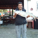 pescaria , bagre  8 kl