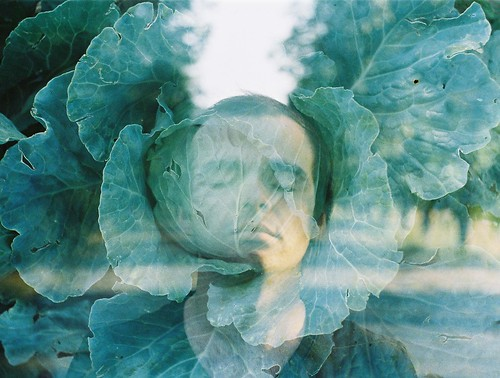 Double exposure with cabbage