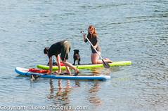 _DSC1299.jpg (orig_lowolf) Tags: people woman usa dog man oregon nikon flickr lakeoswego georgerogerspark paddleboarder d300s sigmaaf150500mmf563apodgoshsm willimatteriver