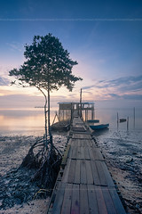 Lonesome Aging Wharf (chaoticbusher) Tags: morning blue sea portrait tree water sunrise landscape photography dawn golden wooden high sand nikon singapore soft glow dynamic body jetty tide horizon low smooth warmth filter lee hour wharf malaysia multiple format moment fullframe nikkor dslr fx 06 kampong aging range index current dri muddy hdr pathway coolness johor silky density blend tanjung d800 dx bahru indicator neutral lonesome 2014 gradual gnd langsat accompany 1024mm walkyway