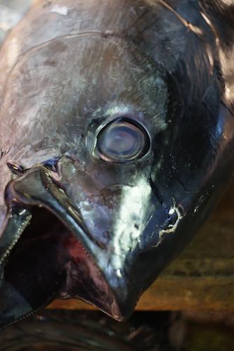 fishhead.jpg