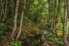 Vereda del arroyo (P. Medina) Tags: verde green arboles arroyo cervo sargadelos burela