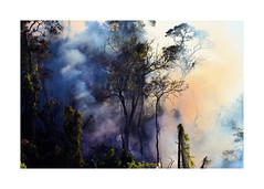 Gray September (W Gaspar) Tags: trees brazil minasgerais brasil season fire woods nikon smoke burning drought nikkor seca fogo mata árvores fumaça incêndio juizdefora 55200mm morrodoimperador d5100 wgaspar