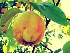 (Alin B.) Tags: autumn fall nature fruit september toamna septembrie alinbrotea